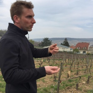 Vineyard planted in 2003 with all 7 varieties